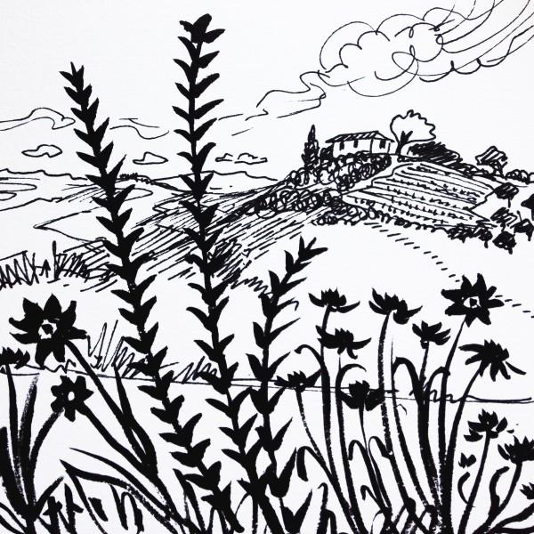 Daily Sketch No. 68, Piedmont Wildflowers