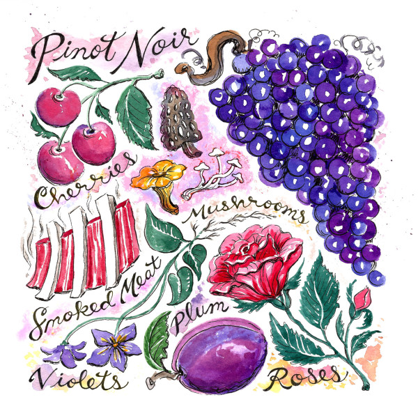 PinotNoir2_watercolor_web